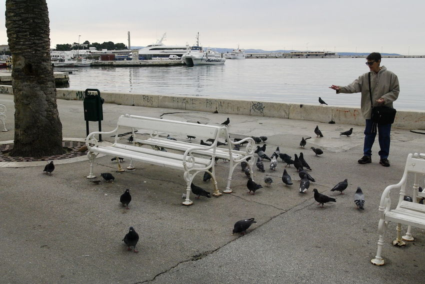 Adriatic Adriatic Sea Adult Adults Only Benches Boats Boats At Dock Day Doves Feeding  Feeding Birds Feeding Pigeons Full Length Lifestyles One Person Outdoors Parapet Parapet Wall People Pigeons Real People Sea Water White Benches Woman