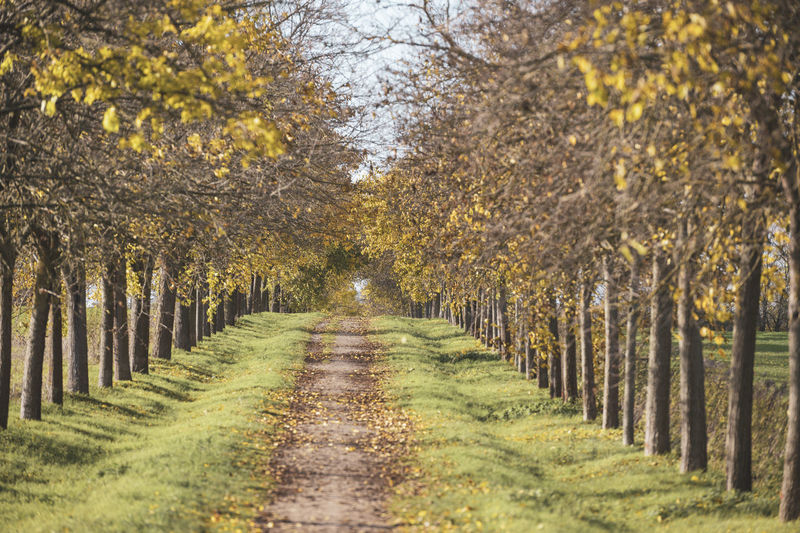 Trees growing in farm during autumn
