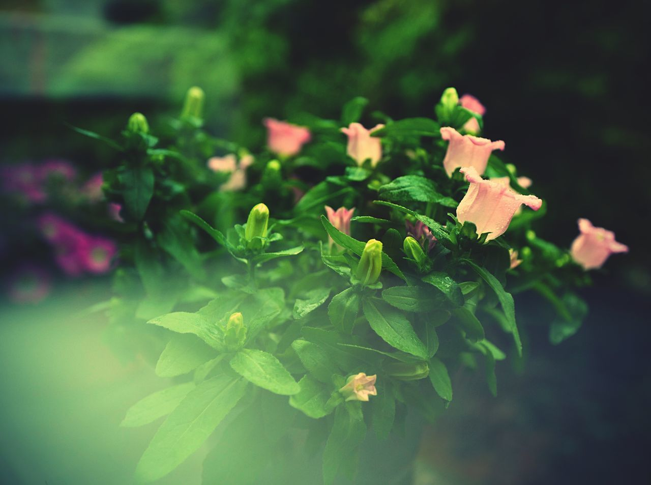 plant, green color, beauty in nature, growth, nature, flower, leaf, freshness, fragility, outdoors, no people, close-up, blooming, flower head, day