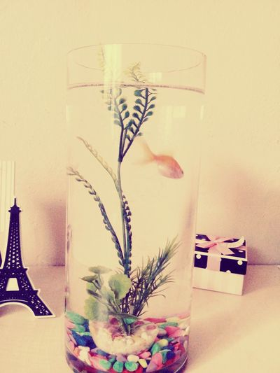 Guest Fromsummer Fish Eiffeltower MyRoom Cute Clours Alittlebit Peace Serenity No People