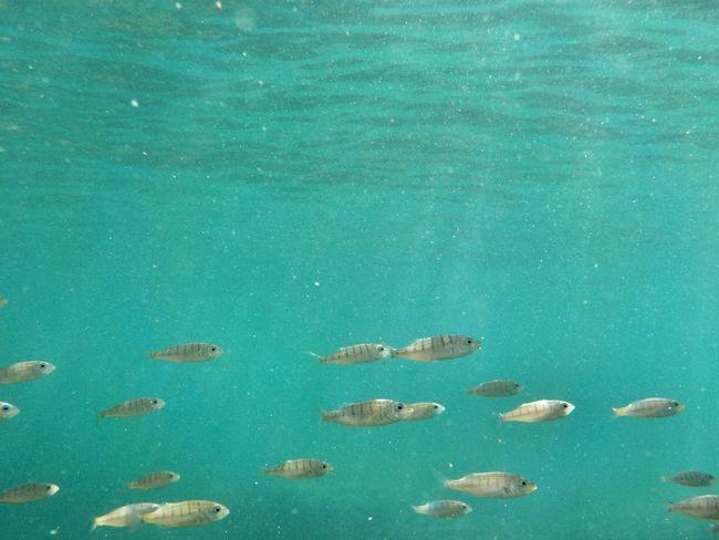 Plemmirio - Pillirina 🐠 Water Blue Nature Sea No People Day Backgrounds Beauty In Nature Outdoors Swimming UnderSea Gianni Lo Turco UnderSea Underwater World Underwaterphotography Underwater Photography Underwater