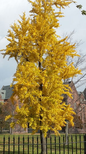 autumn colorFall Colors Bufffalo,NY الوان منتصف الخريف Autumn Colors EyeEm Selects