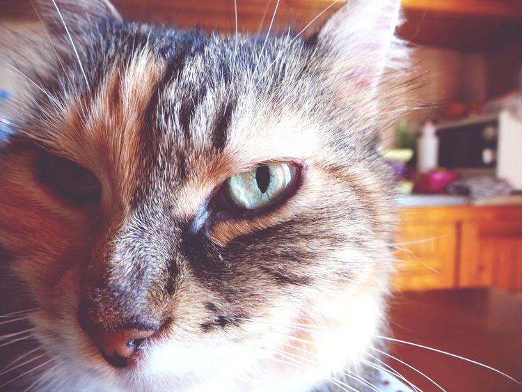 Mycat Macro