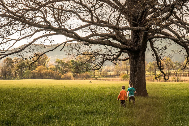 Young Boy and Girl Running In a Field Toward a Tree Children Innocence Bare Tree Beauty In Nature Branch Childhood Day Field Grass Growth Nature Outdoors People Real People Rear View Rural Scene Sky Togetherness Tree Two People Walking