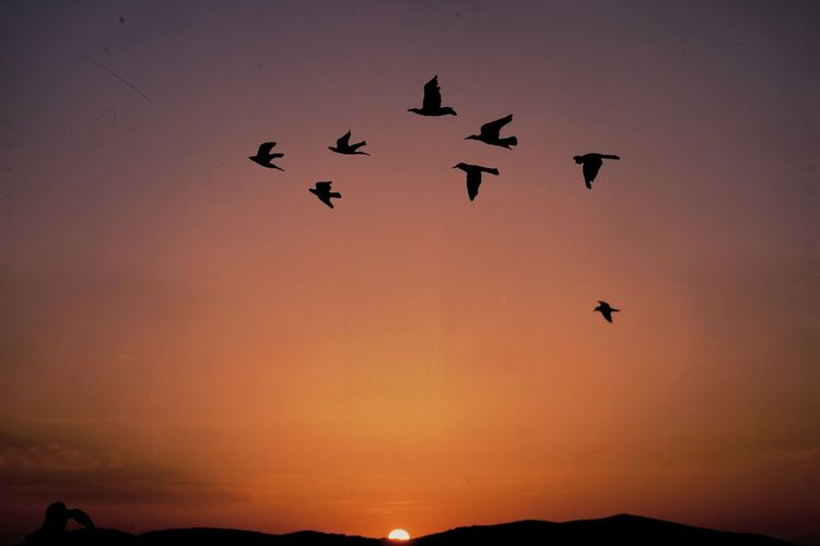 Freedom Lanscape Photography Sky_collection Skylight Animal Wildlife Sky Nature Beauty In Nature Bird Of Prey Landscape Day No People Animal Themes Silhouette Sunset