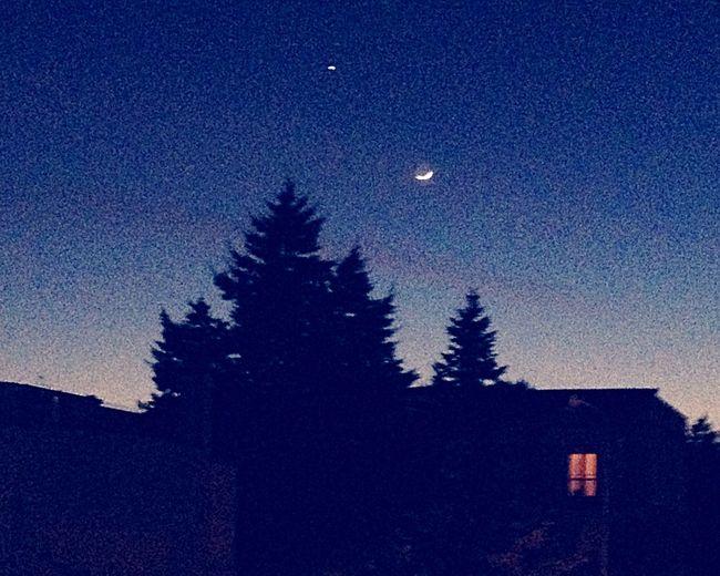 Lo stregatto stasera ci fa un salutino Hanging Out Hello World Night Notte Luna Moon Cheese! Stella Star