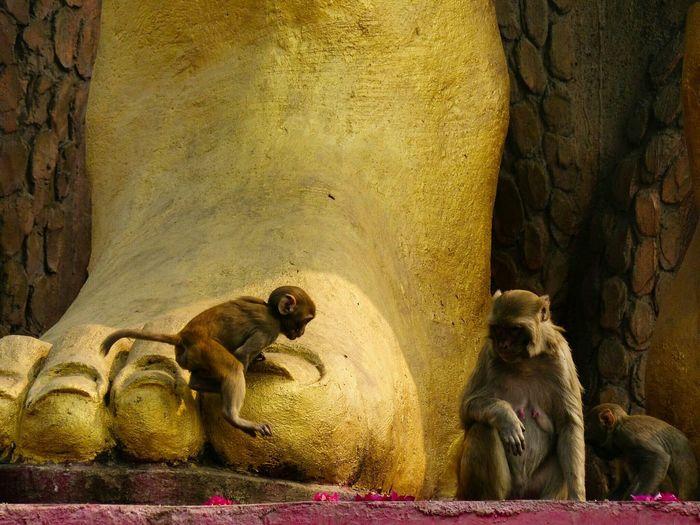 Monkeys playing at the foot of the gods. India Monkeys Monkey Shiva Gods The Traveler - 2015 EyeEm Awards Travel Photography Traveling EyeEm Best Shots Eye4photography