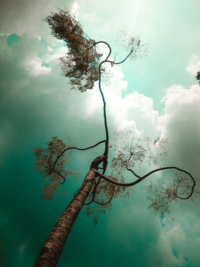 Tree 1 Sky Greensky Saveourgreen Nature_lovers Green Nature_collection Nature Photography Water Tree Sky Cloud - Sky