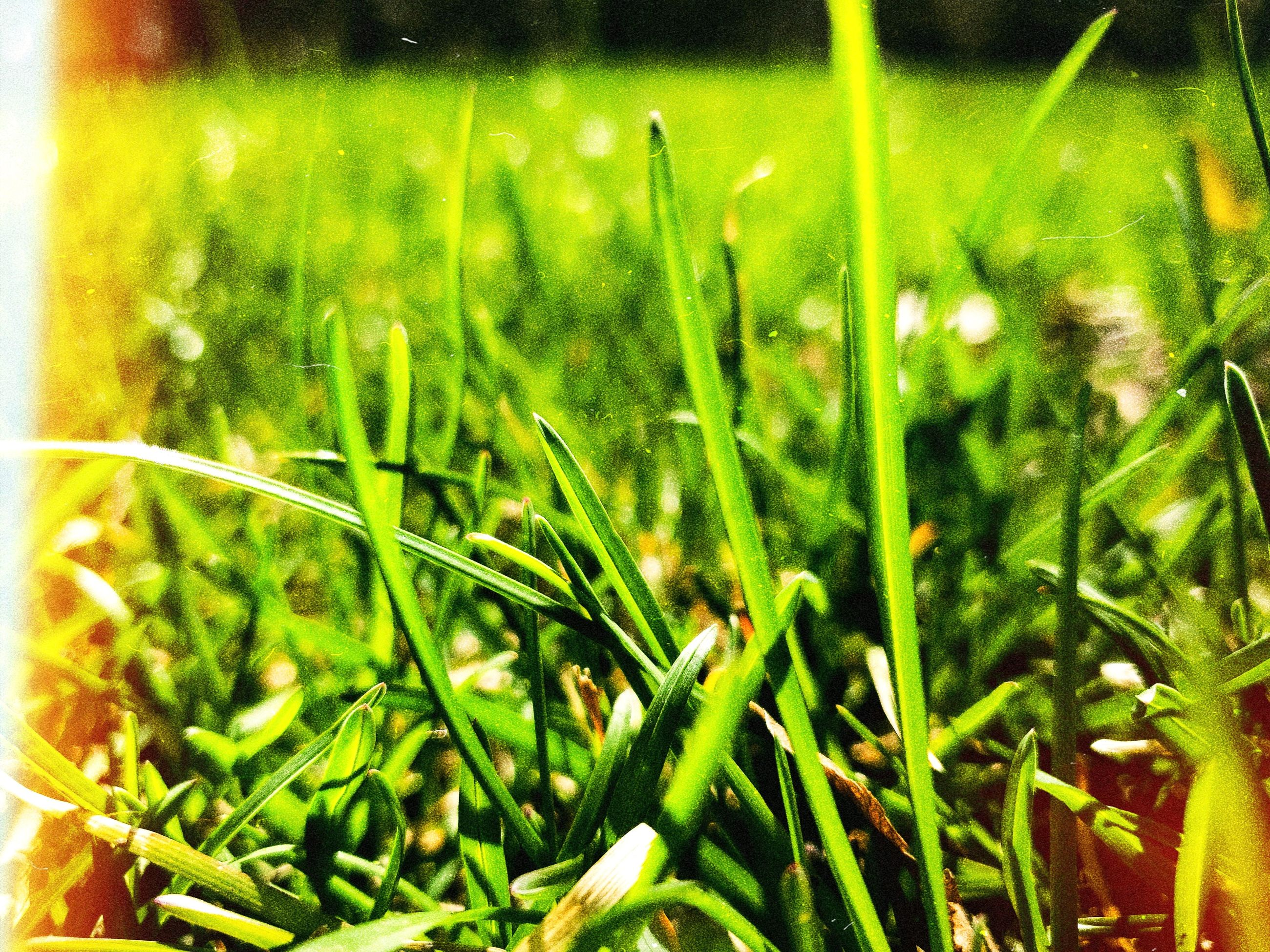 green color, plant, growth, grass, close-up, nature, beauty in nature, no people, blade of grass, land, field, freshness, day, water, selective focus, tranquility, wet, outdoors, sunlight, purity, dew