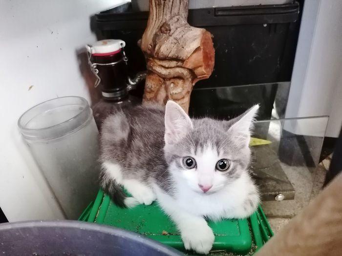 Portrait of kitten sitting by cat