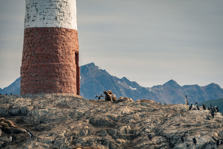 View of sea lions on rock