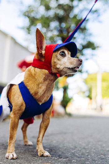 Low angle view of dog in pet clothing standing on street