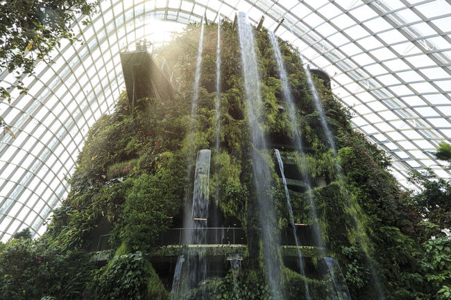 Singapore, Singapore - October 16, 2018: Waterfall inside the Cloud Forest Dome Gardens by the Bay in Singapore. Singapore Cloud Forest Dome Flower Dome Gardens By The Bay Marina Bay Sands ASIA Waterfall Greenhouse Smart City Green Environment Conservation Exotic Flora Fern Plant Grass SuperTree Supertree Grove