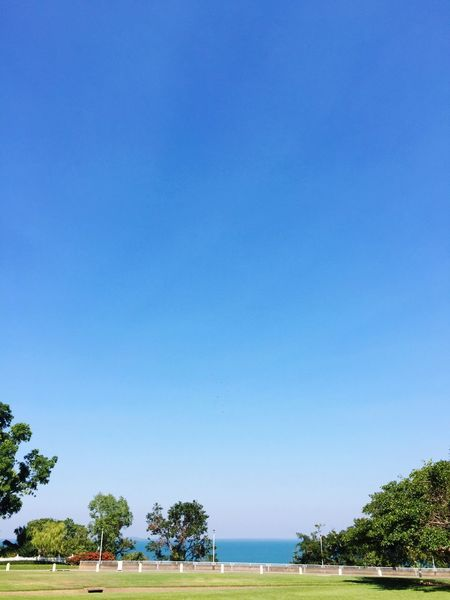 Tree Plant Blue Water Clear Sky Sky Beauty In Nature