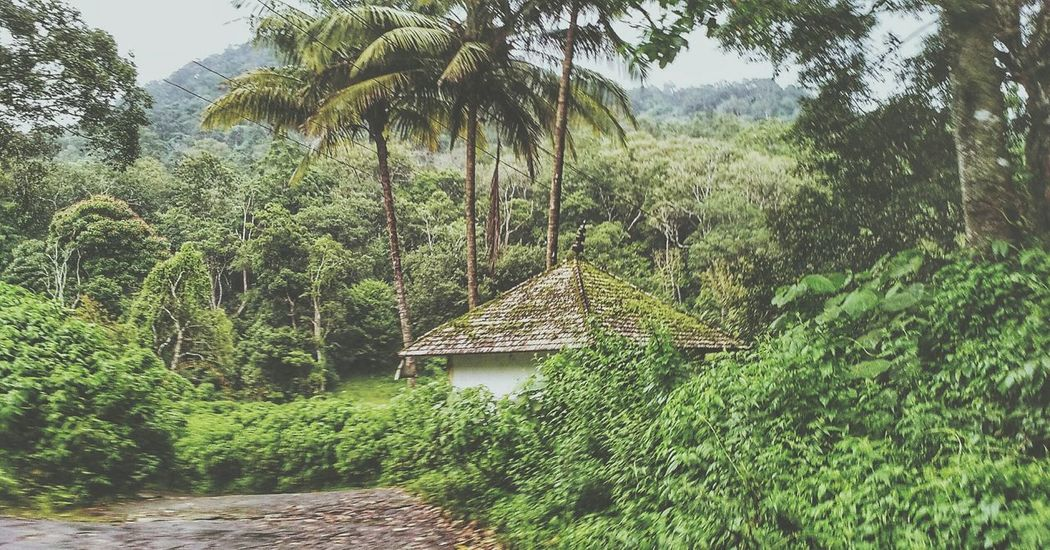 🌴🌴🏣🌴🌴 Tree Growth Nature No People Outdoors Green Color Beauty In Nature Grass Day Sky Peace ✌ EyeEm Nature Lover EyeEmNewHere Natural Photography Lonely House Lonely Hut Trekking Nature Love Nature_collection Love For This World 🌎 🌎 🌎 🌎 🌎 Carefornature