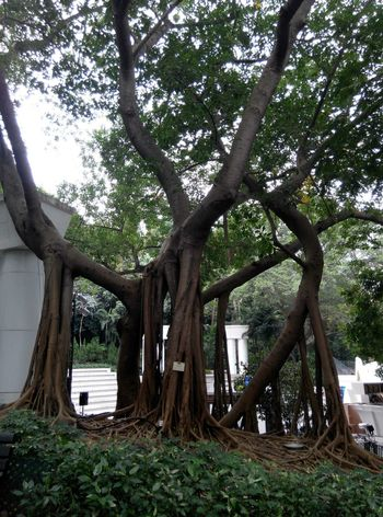 Wonderful tree Hello World