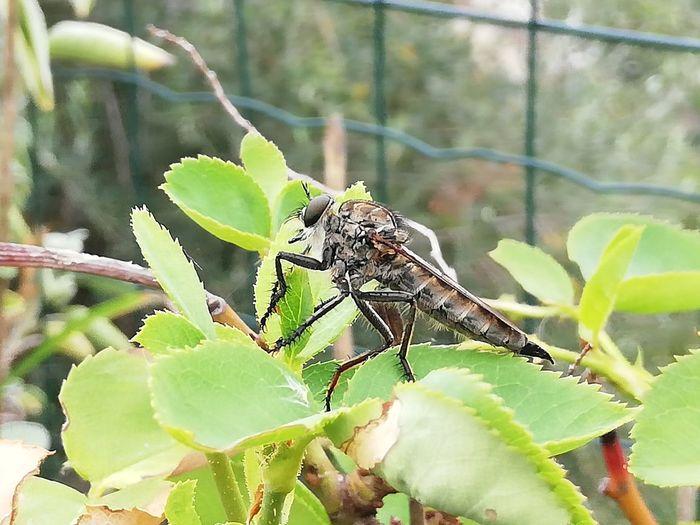 Leaf Leg Insect