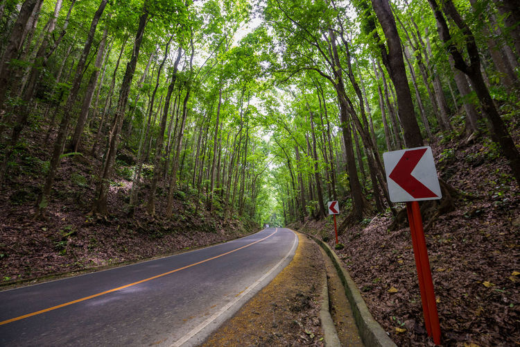 Directional Sign By Road Amidst Trees In Forest