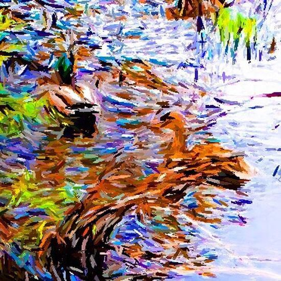 Ducks at the Lake Sketchsplashapp Check This Out Taking Photos Color Photography Nature Perfect Spring Into Spring Flowers, Nature And Beauty Iphonephotography Spring Has Arrived Landscapes And Lakeviews