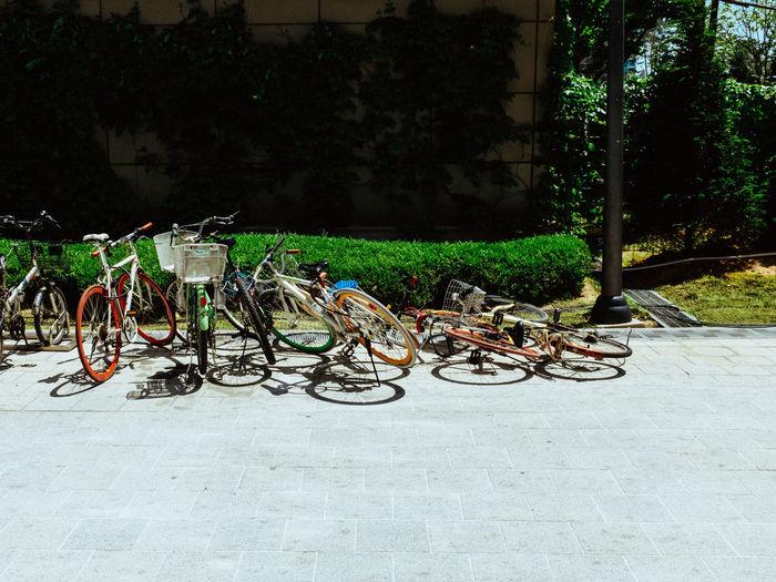 Bicycles on tree