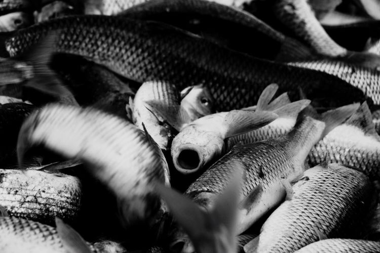 Black And White Friday EyeEm Selects The last breath of the fish..🦈🧡 Animal Themes