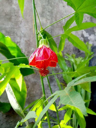 florcita Flor Florecido Planta Jardin Plant Verde Leaf Red Flower Close-up Plant Green Color Flower Head Plant Life Botany