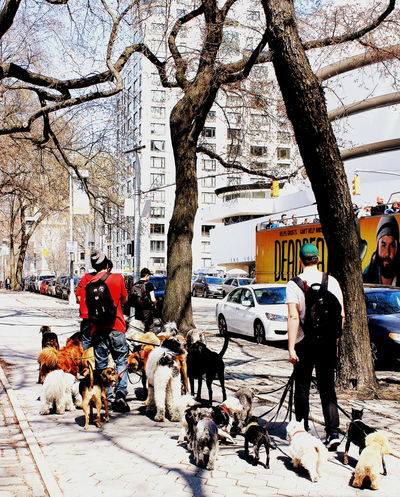 One day, in NY City... :) Dogs Walking Balade Chiens City City Life Day Dogs Gang De Chiens Guggenheimmuseum Lifestyles New York City Outdoors Promenade Des Chiens Tree USA
