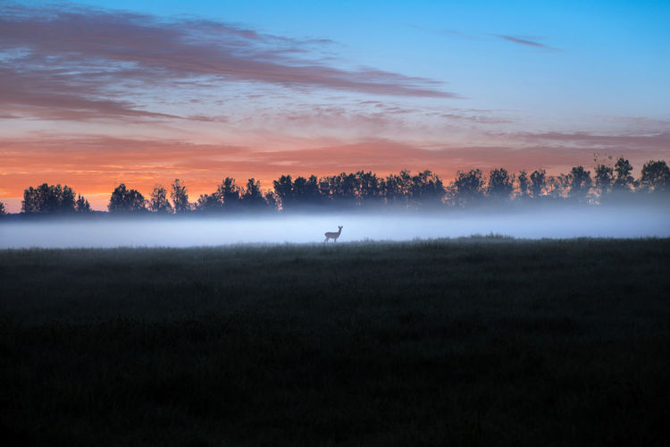 Deer Beauty In Nature Cloud - Sky Deer In Fog Environment Field Fog Foggy Hazy  Land Landscape Nature No People Non-urban Scene Orange Color Outdoors Plant Scenics - Nature Sky Sunset Tranquil Scene Tranquility Tree Vertebrate
