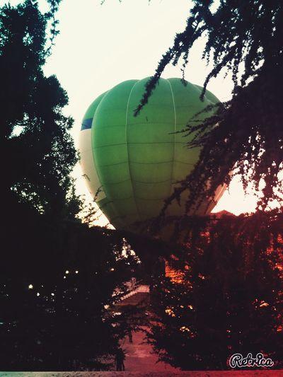 Hotairballoon Trees