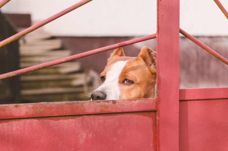 Portrait of dog on red boat