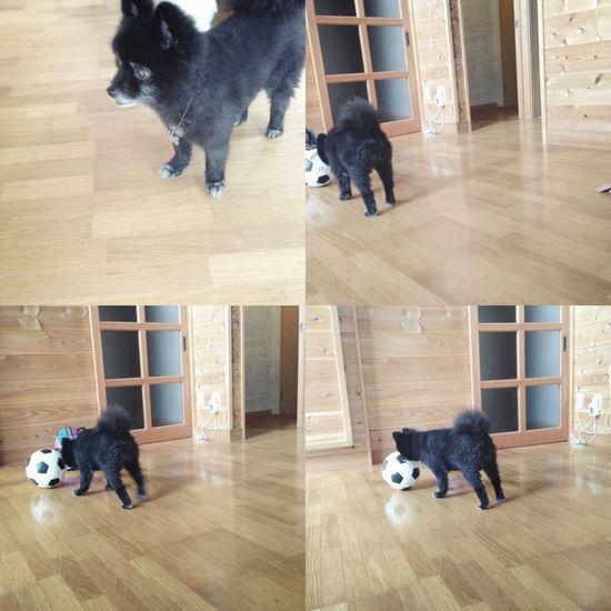 Dogs Cute♡ Kuma Taking Photos