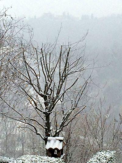 Winter Cold Temperature Snow Bare Tree Nature Tree Weather