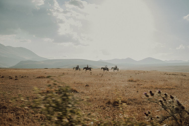 View of horses on landscape against sky