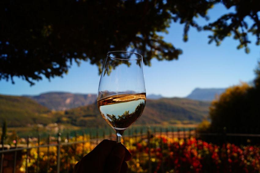 Wine Wineglass Drink Focus On Foreground Close-up Eyeemphotography EyeEm Gallery EyeEmNewHere EyeEm Selects EyeEmBestPics EyeEm Best Shots Kalterer See Kaltern