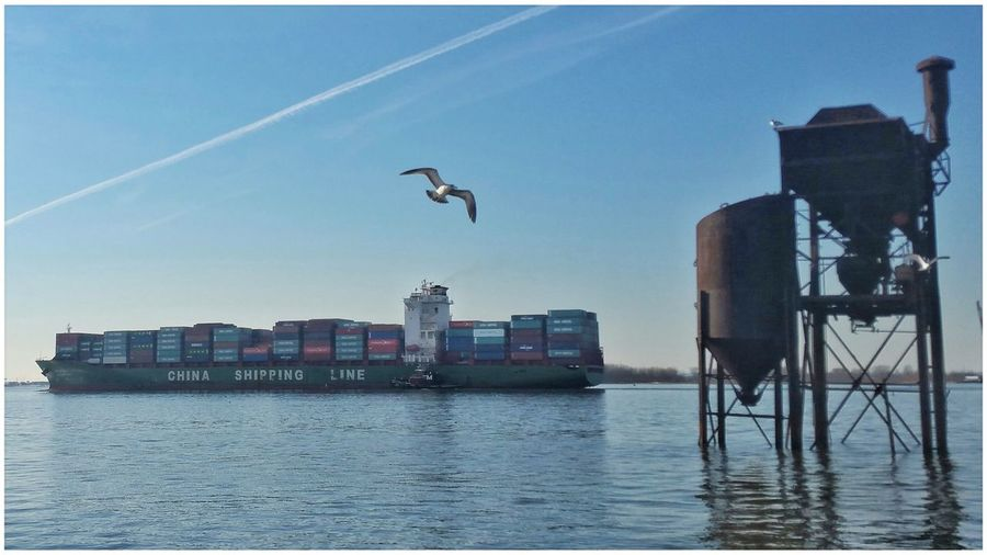 Cargo Ship Shipping Containers Seagulls Bay Bayonne