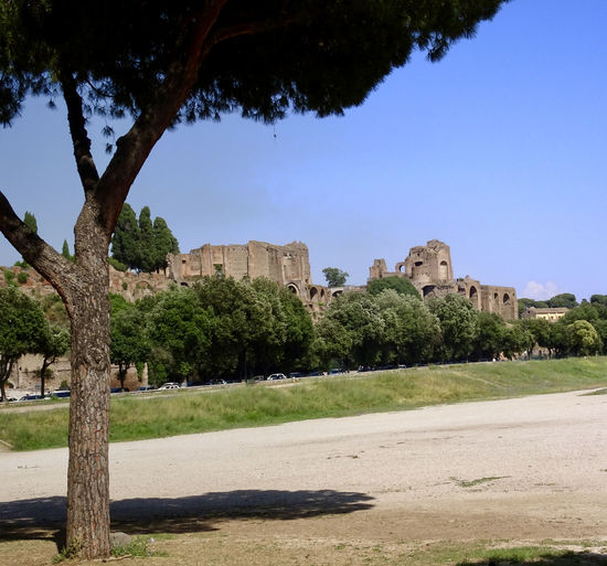 Ben Hur Circus Maximus Ancient Ancient Civilization Architecture Building Exterior Built Structure Clear Sky Day Growth History Nature No People Old Ruin Outdoors Plant Shadow Sky Sunlight The Past Travel Travel Destinations Tree