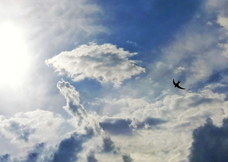 The Great Outdoors - 2017 EyeEm Awards Flying Sky Cloud - Sky Mid-air Airshow Transportation Outdoors Silhouette Day Nature No People Bird Aerobatics Full Frame Contrast Cloud Beauty In Nature Birds Bird Photography Skylark  Swallow Birds_collection Blue Sky Clouds And Sky