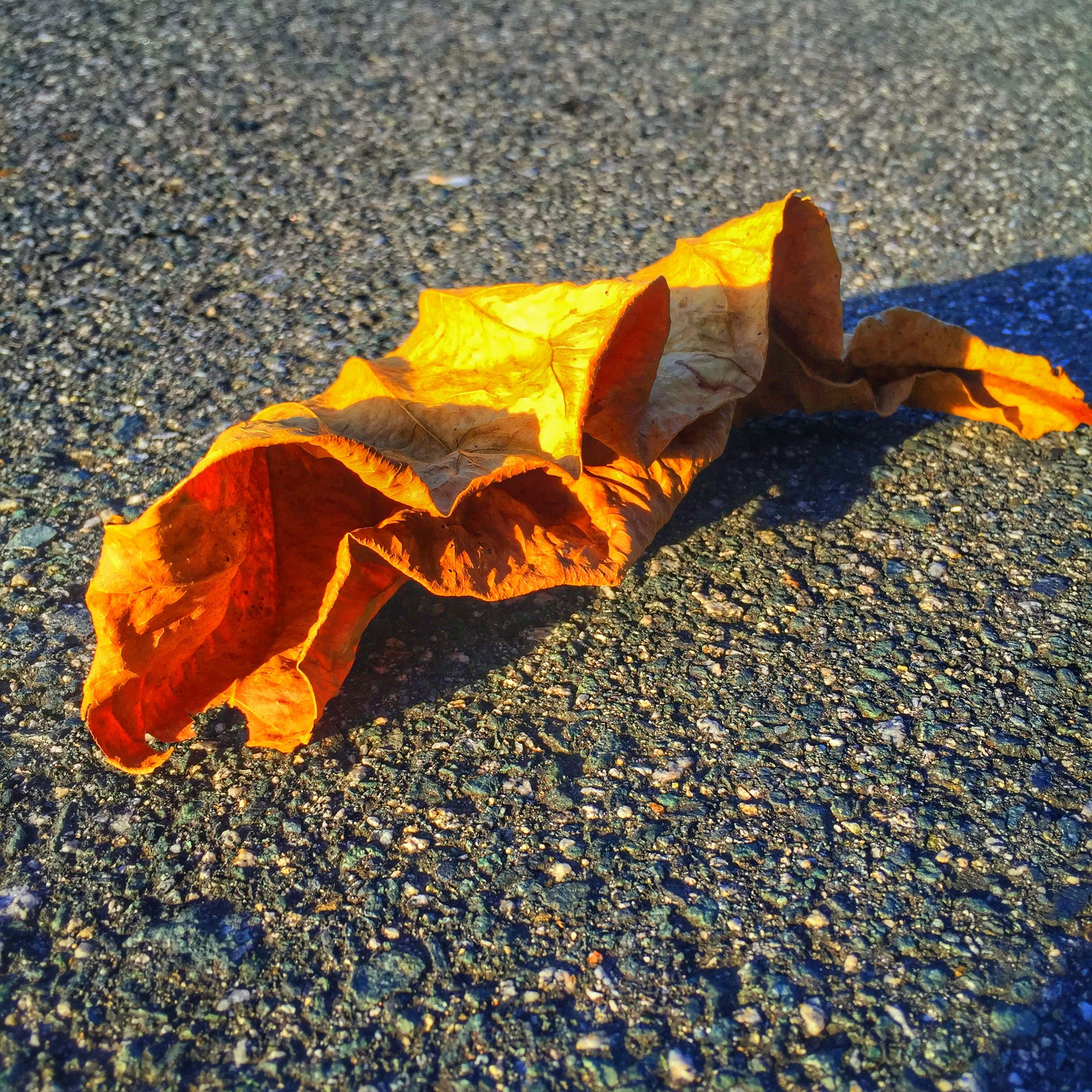 autumn, leaf, change, season, dry, fallen, leaves, yellow, street, asphalt, high angle view, maple leaf, nature, close-up, ground, road, leaf vein, day, outdoors, wet