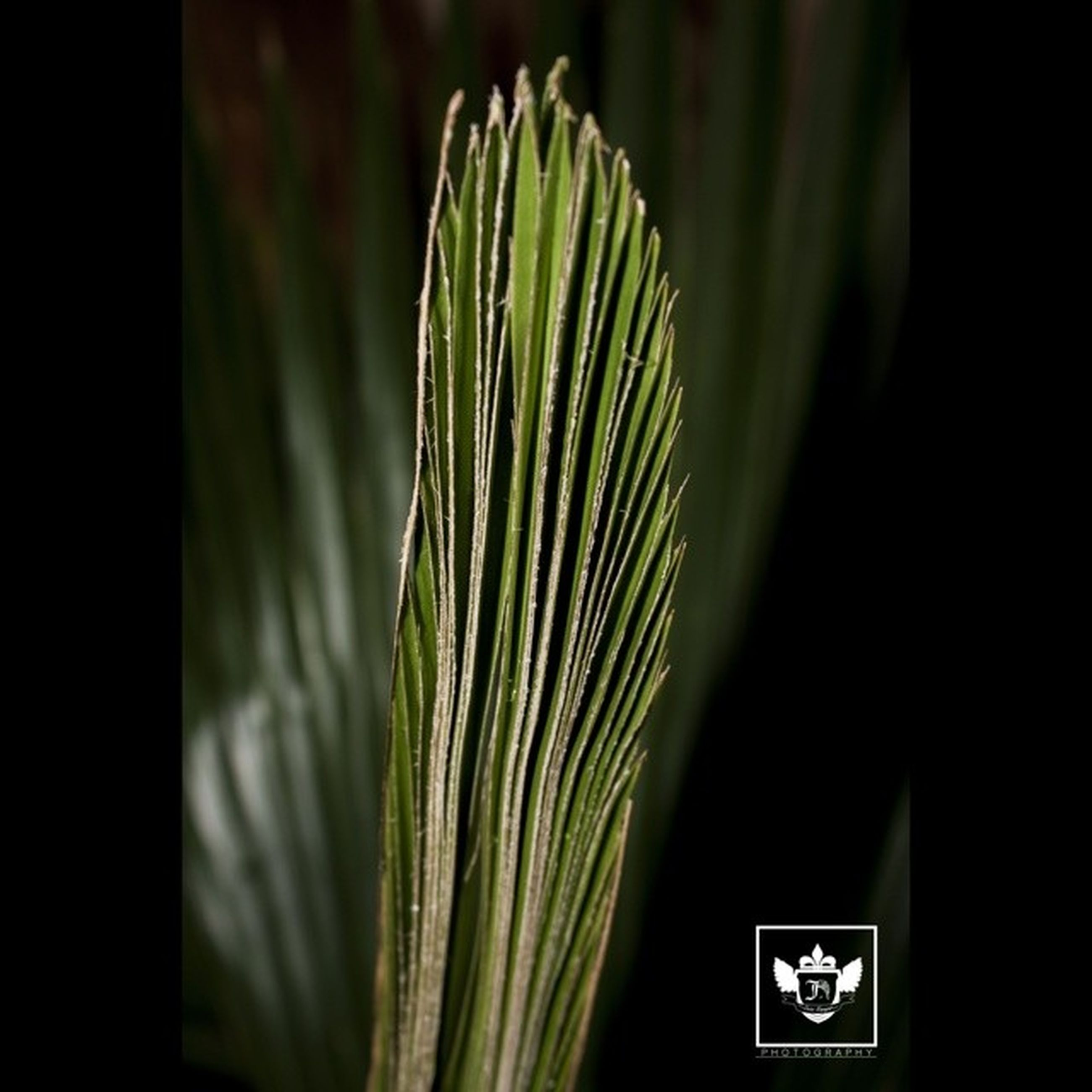 green color, growth, plant, close-up, leaf, green, indoors, nature, text, no people, focus on foreground, potted plant, communication, studio shot, dark, beauty in nature, copy space, day, selective focus, black background