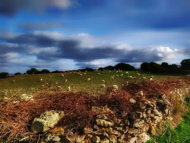 Trees Stones Grass Beauty In Nature Nature Animal Themes Scenery Shots Shep Sky And Clouds Sky Agriculture Photography EyeEm Ready   EyeEmNewHere