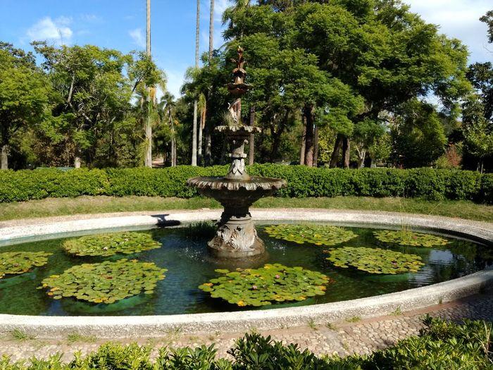 Tree Water Statue Sculpture Botanical Garden Park - Man Made Space Drinking Fountain Spraying Topiary Sunlight Garden Path Sculpted