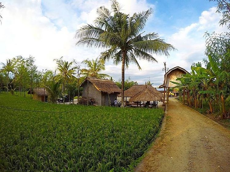 Our village Lombokisland Lombokhighlight Agushariantophotography Livingthedream Green Ricefield