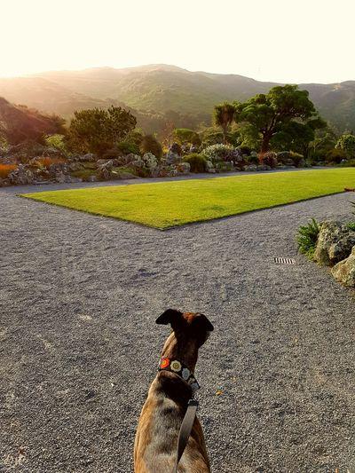 Landscape Outdoors Sunset Animal Themes One Animal Dog Pets
