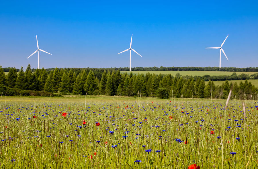 Alternative Energy Beauty In Nature Blue Day Environmental Conservation Field Flower Fuel And Power Generation Grass Growth Industrial Windmill Landscape Nature No People Outdoors Plant Renewable Energy Rural Scene Scenics Sky Technology Traditional Windmill Wind Power Wind Turbine Windmill