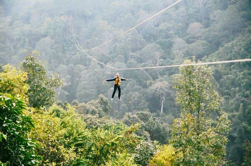Zipline Doisaket Tree Nature Forest Lush Foliage Mountain Beauty In Nature Adventure Outdoors One Person Adults Only Full Length Day Real People Sky Sports Clothing Only Men Adult People One Man Only Young Adult Chiang Mai | Thailand Thailand Doisaket