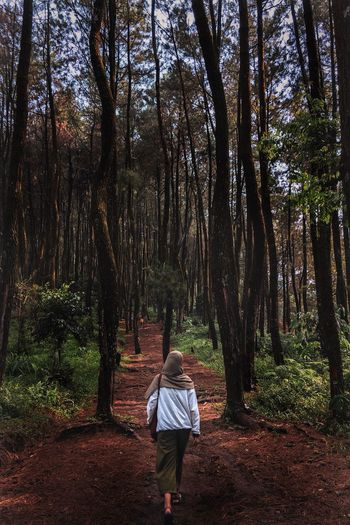 Rear View Of Woman Walking Against Trees In Forest