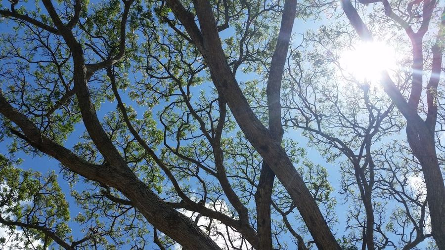 Beauty In Nature Branch Day Growth Low Angle View Nature No People Outdoors Sky Sunbeam Tree