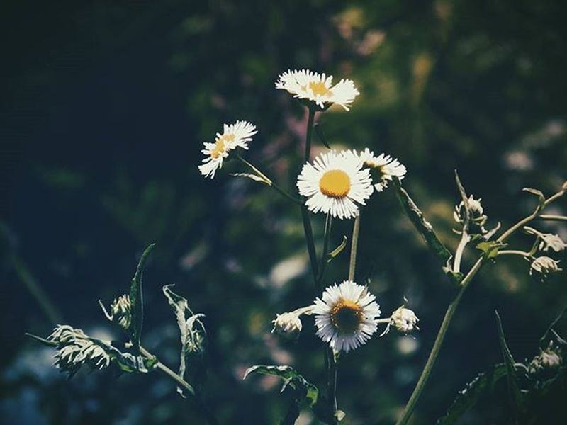 Modern Survivors Flowers Flores Floral Nature NaturalBeauty Natural Natureza Colors Garden Jardim Vintage Hipster Superhubs_souls VSCO Vscocam Life Vida Photograph Photography Fotografia Photo Pic Art Arte Beautiful beauty beleza dark super_shotz survivor