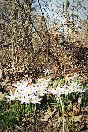 Der Frühling kommt unaufhaltsam. ☺