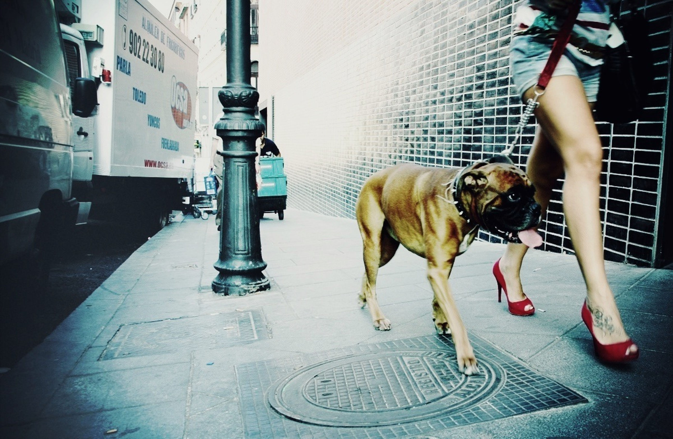domestic animals, pets, dog, one animal, mammal, animal themes, full length, pet leash, street, pet collar, indoors, walking, standing, transportation, men, day, architecture, built structure